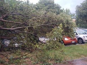 """Un albero caduto per il maltempo a Bergamo (Foto dal gruppo Facebook """"Sei di Bergamo se…"""")"""