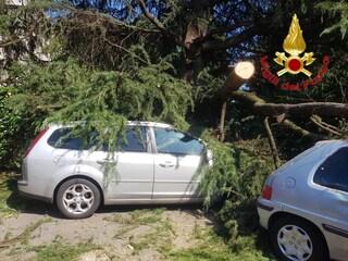 Milano, albero cade in strada per la pioggia: nessun ferito, due auto danneggiate