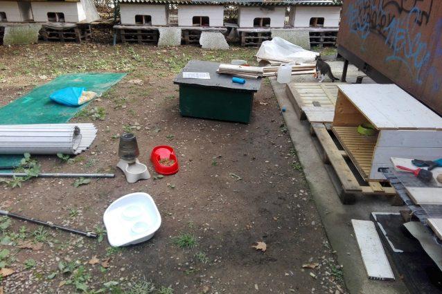 La colonia felina dopo l'assalto