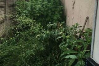 Le piante di marijuana sporgono dal balcone: i carabinieri se ne accorgono e arrestano un 59enne