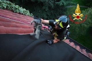 Milano, gattino incastrato sul tetto al 6° piano: lo spettacolare salvataggio dei vigili del fuoco