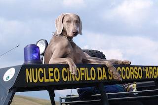 Fiorano al Serio dice addio a Greta, eroico cane da soccorso: dai premi ai salvataggi di Amatrice
