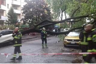 Maltempo, a Cinisello Balsamo albero di 12 metri cade su un'auto: paura ma nessun ferito