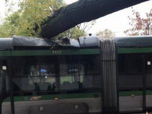 Maltempo a Milano, albero crolla su un tram: paura per i passeggeri