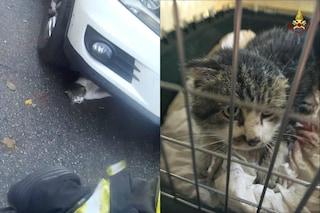 Melegnano, incastrato nel motore di un'auto: gattino salvato dai vigili del fuoco
