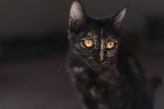 Milano, gatto imprigionato da 15 giorni nelle gallerie della metropolitana: salvataggio nel tunnel