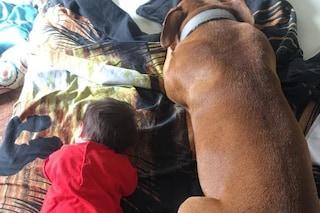 Varese, cane vittima di avvelenamento ha bisogno di cure: parte la raccolta fondi su Facebook