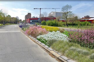 Milano, prato al posto dell'asfalto: nasce la via delle api, la più lunga strada fiorita d'Italia