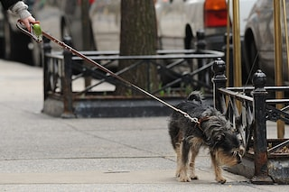 Milano, se i cani fanno la pipì per strada i padroni dovranno pulire con acqua e sapone