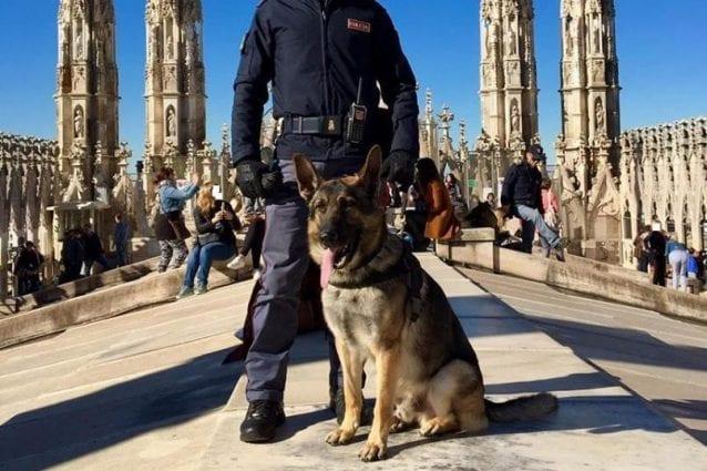 Il cane poliziotto Labor