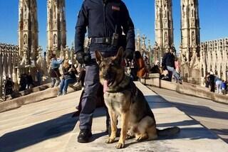 Milano, pusher scappa a controllo degli agenti nel parco Sempione: fermato dal cane poliziotto Labor