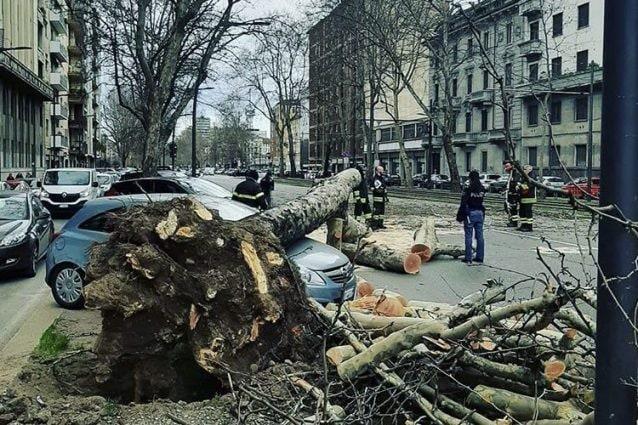 L'albero caduto su un'auto in corso Sempione a Milano (foto Instagram)