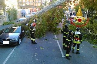 Milano, albero caduto per il vento schiaccia una donna in via Cornelio Tacito: è grave