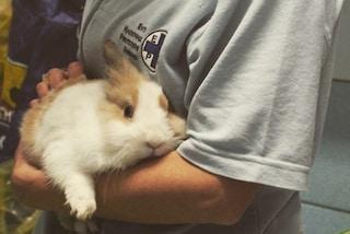 """Milano, trovato sotto un'auto, volontari dell'Enpa salvano un coniglio: """"Ora cerca una casa"""""""