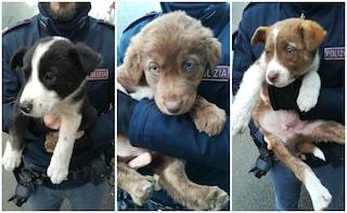 Lodi, tre cuccioli di cane ritrovati dalla polizia in una scatola: ora cercano una nuova famiglia