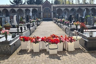 Pieve Fissiraga, tulipani su tutte le tombe del cimitero in vista della Pasqua in lockdown