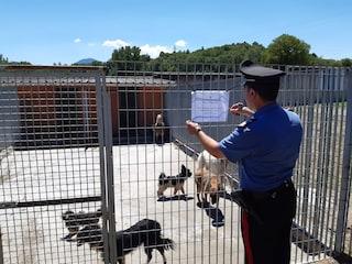 Salvati 12 cani in gabbia nel Casertano: legati a catene così strette che avevano lacerato il collo
