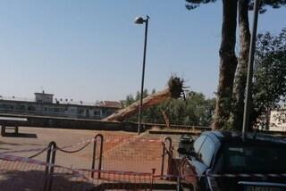 Vomero, crolla un pino in via Domenico Fontana: danneggiati i motorini parcheggiati