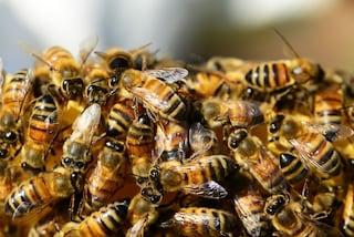 Sarno, attaccato da uno sciame di api, va in shock anafilattico: morto agricoltore di 65 anni