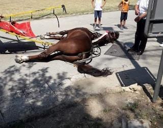 Cavallo muore nella Reggia di Caserta, le indagini: non era autorizzato al trasporto
