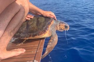 Tartaruga ingoia pezzo di plastica, salvata da velisti e dallo staff di Punta Campanella