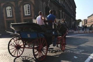 Napoli, nuove regole per le carrozze coi cavalli: sarà tolta la licenza a chi li maltratta