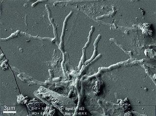 Ercolano, scoperti neuroni in una vittima dell'eruzione del Vesuvio del 79 dopo Cristo