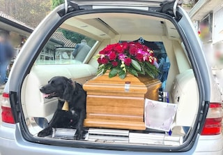 Buonabitacolo, il cane accompagna il feretro del padrone morto al cimitero
