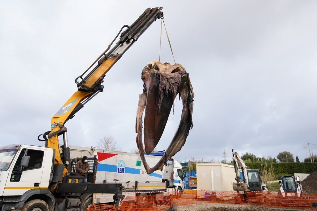 La balena tornata in Costiera stamattina