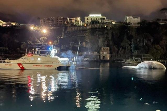 Le operazioni di rimozione della carcassa della balena (Foto: Guardia Costiera)