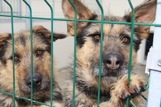 Inaugurato a Napoli il centro municipale d'accoglienza per cani di via Janfolla