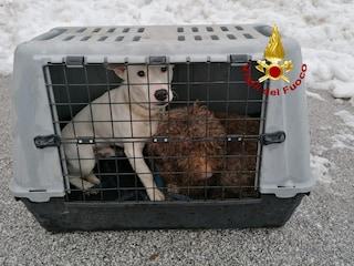 Bloccati tra la neve sul Santuario di Montevergine con i loro cani: salvati dai pompieri