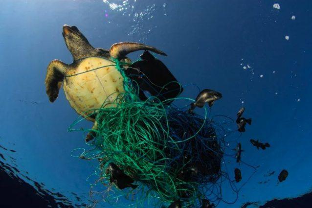 Foto di archivio / Greenpeace