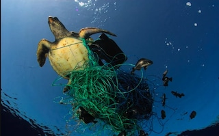 Tartaruga di 60 chili rischia la morte in mare, impigliata nelle reti dei pescatori: salvata