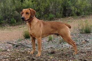 Ruba un cane e chiede un riscatto di 1.400 euro: in carcere un 47enne di Sanza (Salerno)
