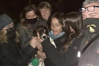 Napoli, salvata cagnolina caduta nel dirupo a Posillipo: era scappata tre giorni fa