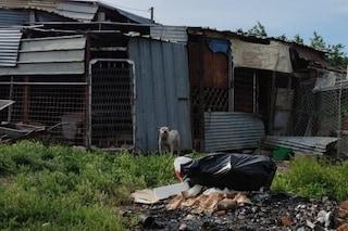 Cani in catene e sommersi tra i rifiuti: il canile-prigione abusivo sequestrato nel Beneventano