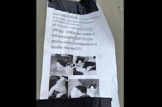 Napoli, taglia di 1000 euro per trovare chi ha investito e ucciso il gatto a Corso Vittorio Emanuele