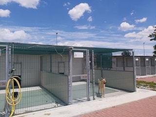 Sgambamento e area picnic: si espande il Centro d'Accoglienza per cani di Napoli