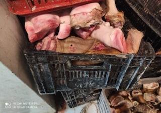 Mezza tonnellata di carne pericolosa per la salute in una macelleria di Pagani