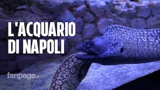 Riapre l'acquario di Napoli: restaurato e rinnovato, tra pesci rari e tecnologia