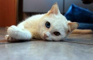 """Poggioreale, allarme gatti avvelenati. I residenti infuriati: """"Anche invasione di ratti"""""""