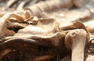 Salerno, le ossa ritrovate potrebbero essere di Caterina Perozziello, scomparsa oltre 2 anni fa