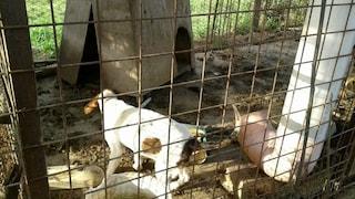 Canile abusivo a Pontecagnano: salvati 39 cani rinchiusi in gabbia