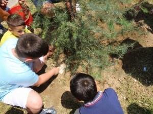 Un momento della posa degli alberi in ricordo di Fortuna e Antonio, entrambi uccisi al Parco Verde di Caivano (Napoli)