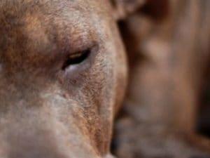 Uccise di botte la sua cagnolina Chicca in strada a Salerno: condannato a 1 anno e 9 mesi