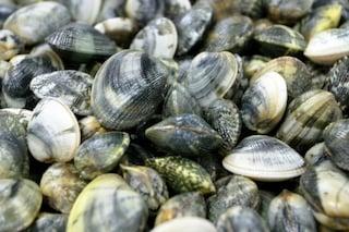 Castellammare, vongole pescate nella melma: rischio epatite e salmonella