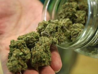 Cannabis light, iniziano i sequestri dei negozi dopo la sentenza della Cassazione