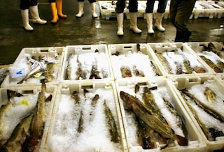 Sequestrata oltre mezza tonnellata di pesce in tutta Napoli e provincia