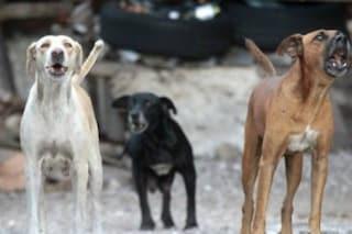 Marcianise, donna azzannata da un branco di cani all'uscita dall'ospedale